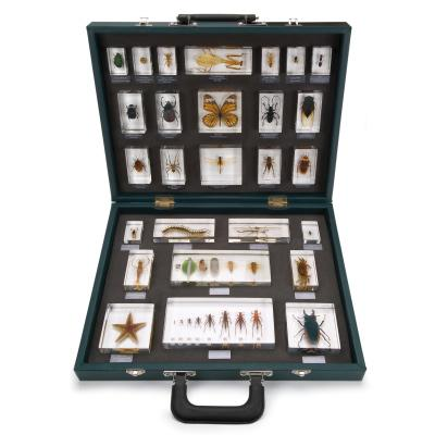 VALISE DE 27 SPECIMENS SOUS INCLUSIONS